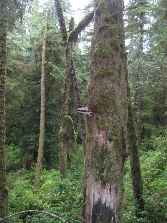 Vancouver Trip 2017 402